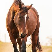 20201006 McCormack Horses