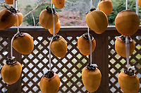 Japanese Persimmon are called kaki and they are usually eaten as a dessert or when there are guests.  Typically they are dried before eaten, and are considered to be an autumn fruit, partly because of the harvest time and also because of their earth tone colors.  They are prized in Asian countries where most of them are grown, especially Japan, China and Korea.  They are much less popular in Western countries, perhaps because they have a slightly slimy texture.