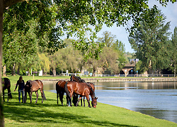 Horses are exercised next to the river Thames during day two of the Royal Windsor Horse Show at Windsor Castle, Berkshire.