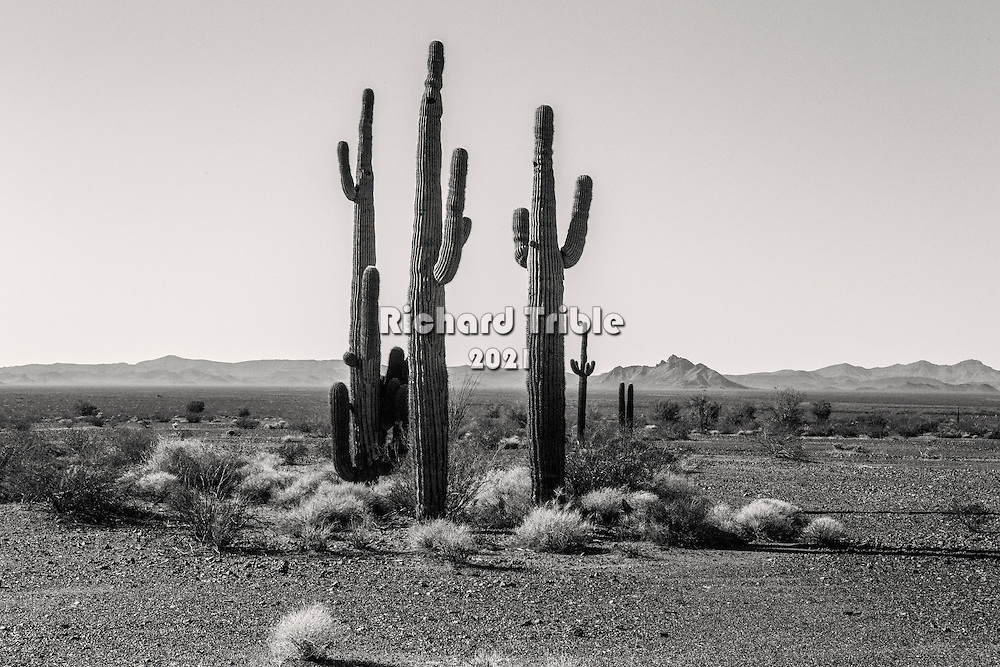 A lonely landscape near the Kofa Mountains. Rainfall is very low.