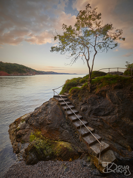 A lone tree stands proud against evening light over a flight of steps leading down to a small cove on the South Devon coast