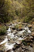 Sugar Loaf Stream, Routeburn, forest, New Zealand