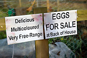 Free range eggs for sale sign on garden fence