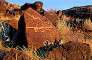 Mountain Lion petroglyph, Petroglyph National Monument, Albuquerque, New Mexico.