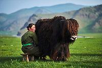 Mongolie, Province de Ovorkhangai, Vallee de l'Orkhon, campement nomade, traite des yaks // Mongolia, Ovorkhangai province, Orkhon valley, Nomad camp, yak milking
