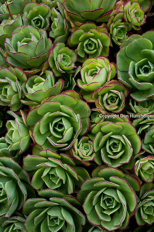 Succulents - Carmel Highlands, CA
