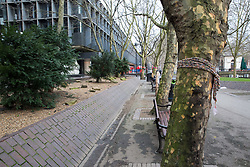 London, UK. 13th January, 2018. Trees in Euston Square Gardens are wrapped with hand-knitted scarves. Activists opposed to the HS2 high-speed rail link have 'yarn-bombed' many of the mature London Plane, Red Oak, Common Whitebeam, Common Lime and Wild Service trees in Euston Square Gardens expected to be felled to make way for temporary sites for construction vehicles and a displaced taxi rank as part of preparations for the controversial HS2 project in order to draw attention to their fate.