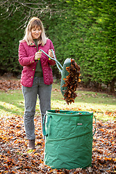 Gathering up leaves with a leaf grabber and collection bag.