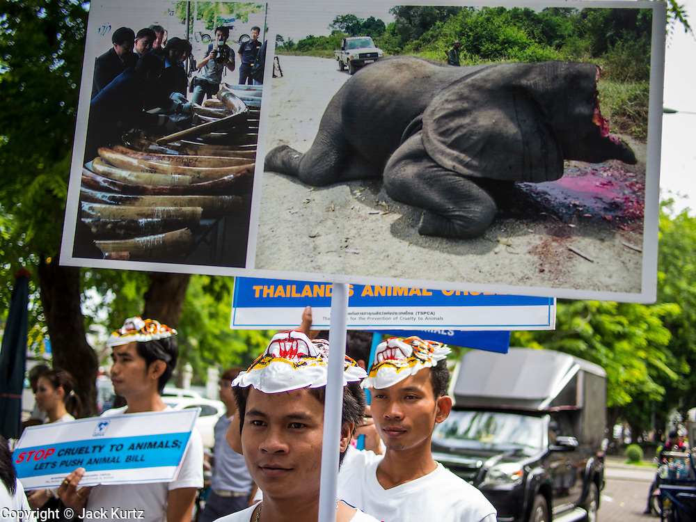 01 AUGUST 2013 - BANGKOK, THAILAND: A member of the Thai SPCA participates in a picket of the Thai parliament. Members of the SPCAT picketed the Thai parliament building in Bangkok Thursday to call attention to proposed anti-animal cruelty laws being debated by the Parliament. The laws would tighten animal cruelty law regarding the dog (and cat) meat trade, buying and selling exotic pets, ivory and endangered animal products (like bear bile and ivory). Thailand serves as a transit point for the endangered animal and exotic meat trade. Ivory is shipped to China. Dogs (for meat) are sold to Vietnam.     PHOTO BY JACK KURTZ