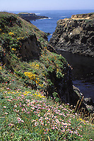 Wildflowers on the Mendocino Headlands state park,  Mendocino California