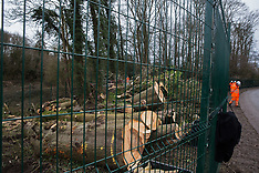 2021-02-21 HS2 tree felling in Wendover