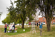 01 SEPTEMBER 2020 - ADEL, IOWA: People pick pears on pear trees that are about 100 years old in Adel Tuesday. Volunteers from Eat Greater DSM gleaned pears at the Dallas County Human Services Campus. The pears will be distributed to Des Moines emergency pantries, community centers, and churches. Gleaning is the act of collecting leftover crops from farmers' fields after they have been commercially harvested or gathering crops from fields where it is not economically profitable to harvest. It is an ancient tradition first described in the Hebrew Bible. A spokesperson for Eat Greater DSM said need has skyrocketed this year. In a normal year, they distribute about 300,000 pounds of food. Since the start of the COVID-19 pandemic in March, they've distributed more than 500,000 pounds of food.        PHOTO BY JACK KURTZ