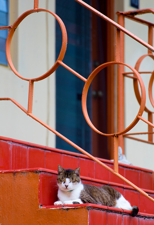 A cat lounges on the stairs of a Miami Modern apartment building in Bay Harbor Islands, a Miami Beach suburb.