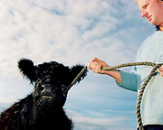 Farmer Gerald Todd and galloway cow 'Queenie' at his farm in Ampleforth, North Yorkshire, UK