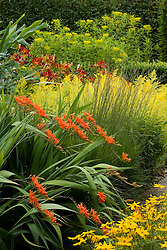 Crocosmia masoniorum with Solidaster lutens 'Lemore' and Euphobia sikkimensis in the Cottage Garden at Sissinghurst Castle
