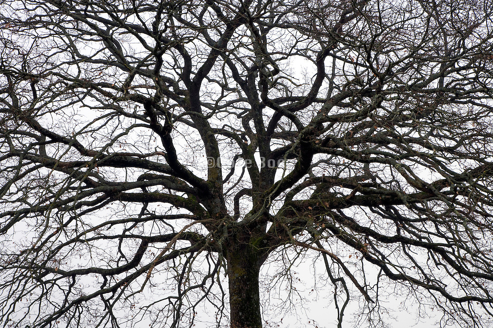 crown of a bare tree during winter season