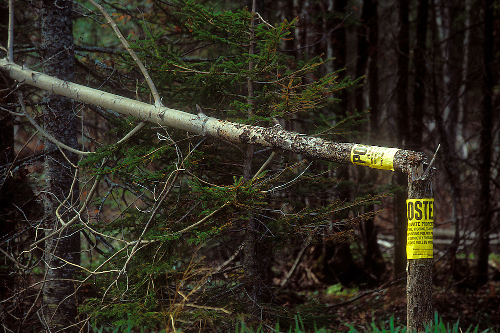 A small tree with two No Trespassing signs is shot in have near a trout stream in Alger County Michigan in the Upper Peninsula.