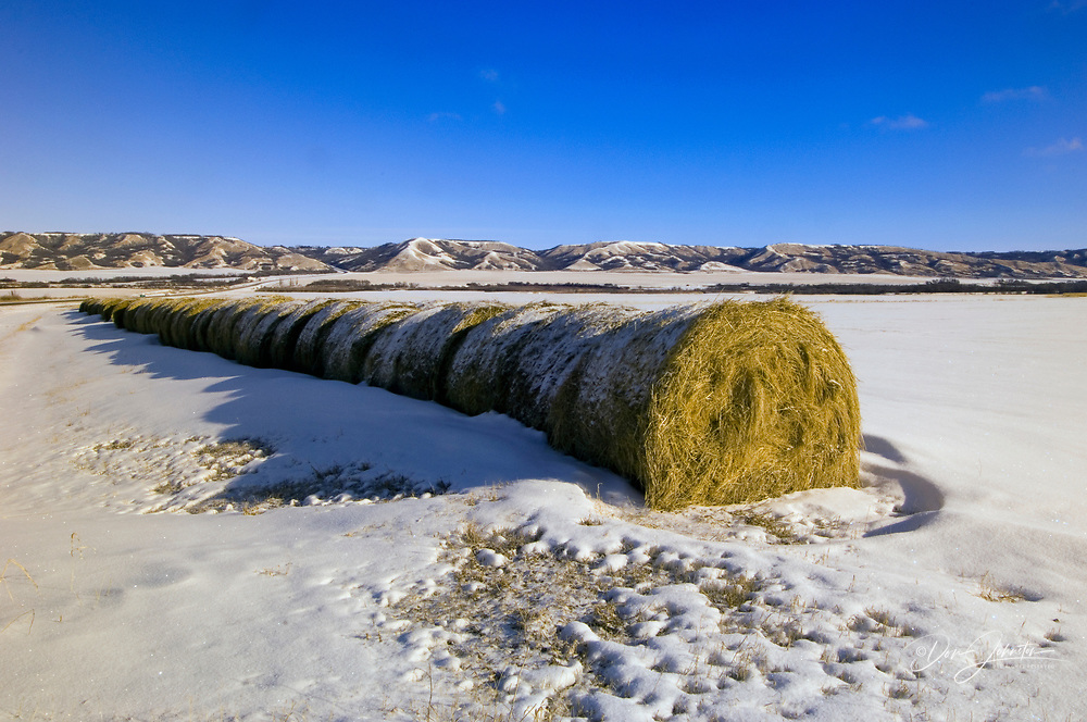 Snow covered line of hay bales in Qu'Appelle River Valley, near West End, Saskatchewan, Canada