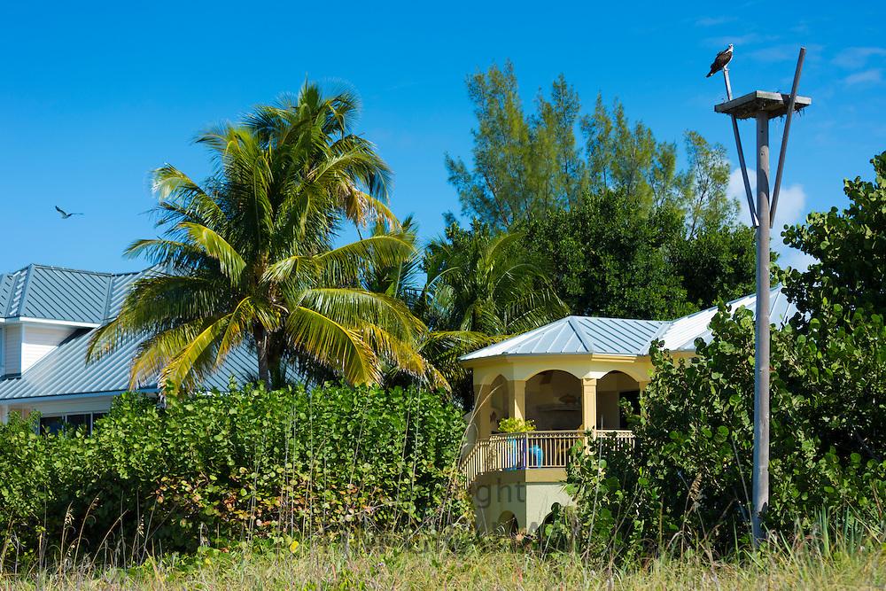 Osprey, Pandion haliaetus, guarding birds nest by beachfront winter home South Seas Island Resort, Captiva Island, Florida USA