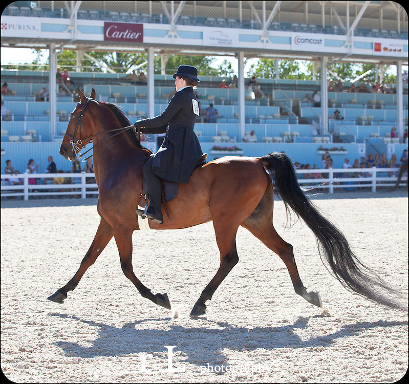 DEVON at Sunset American Saddlebred Horses in competition