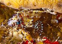 Guam Fish & Invertebrates at night, June 2013
