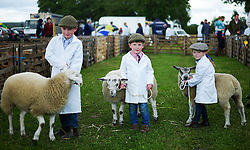 © Licensed to London News Pictures.29/07/15<br /> Borrowby, UK. <br /> <br /> Three young entrants hold onto their sheep during judging at the Borrowby Country Show and Gymkhana in North Yorkshire.<br /> <br /> Photo credit : Ian Forsyth/LNP