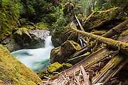 A waterfall on Diobsud Creek, Mount Baker-Snoqualmie National Forest, Washington.