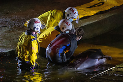 © Licensed to London News Pictures. 09/05/2021. London, UK. Emergency services attempt to rescue a trapped whale at Richmond Lock and Weir. Photo credit: Peter Manning/LNP