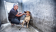 Cesar Millan working with a reluctant pit bull at East Valley Animal Services.