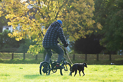 ©Licensed to London News Pictures 10/10/2019.<br /> Sidcup,UK.A man taking his dog for a walk while riding a bike. A cold autumnal October morning at Footscray Meadows on the River Cray, Sidcup, South East London. Photo credit: Grant Falvey/LNP