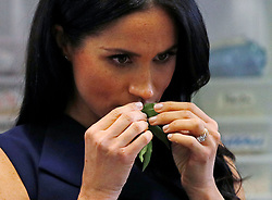The Duchess of Sussex smells traditional native Australian ingredients during a visit to Mission Australia social enterprise restaurant Charcoal Lane in Melbourne, on the third day of the royal couple's visit to Australia.