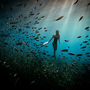 "Sammy ""Salt Siren"" freediving with a school of fish off of Oahu, Hawaii."