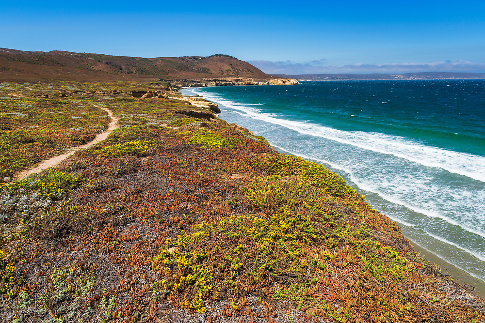 Colorful groundcover on the Skunk Point Trail, Santa Rosa Island, Channel Islands National Park, California USA