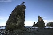 Seastacks at dawn, Rialto Beach, Olympic National Park. (Steve Ringman / The Seattle Times)