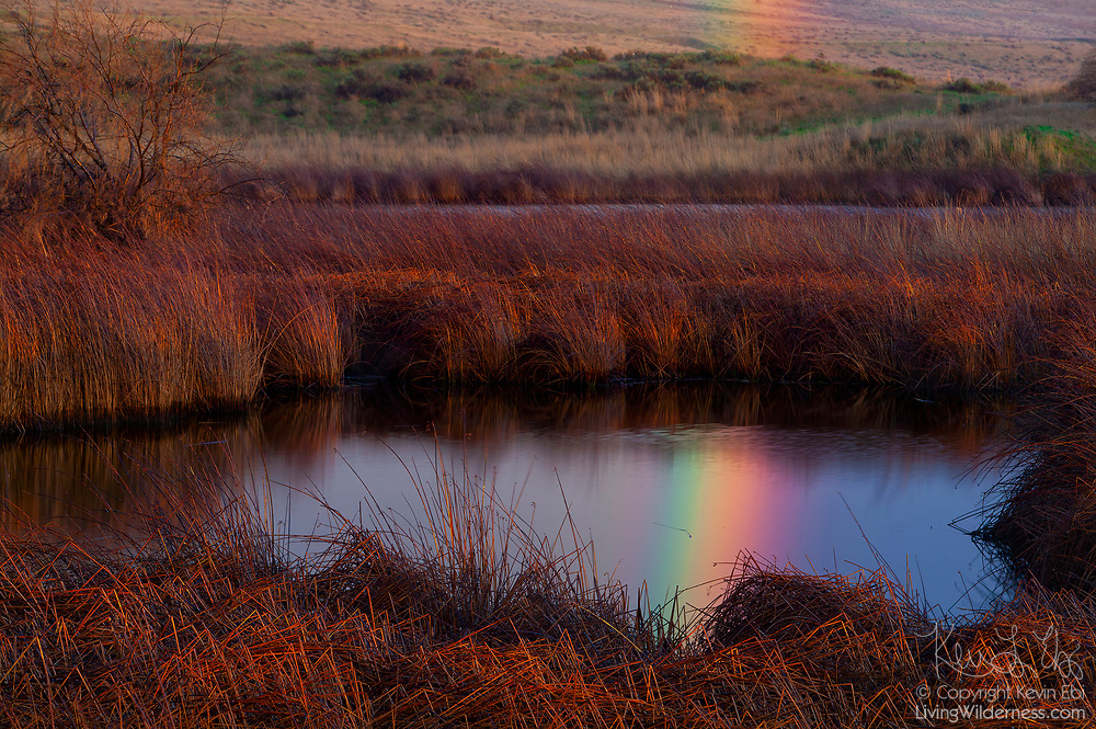 A bright rainbow is reflected on a pool of water in the Burbank Slough, located in the McNary National Wildlife Refuge in the Columbia Basin of Washington state.