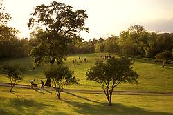 "The ""Dog Park"" at Buffalo Bayou."