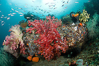 Soft Corals and Reef Fish<br /> <br /> shot in Indonesia
