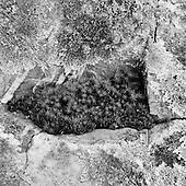 Australian Bush : Black Mountain
