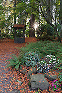 Fall flowers and the wishing well at the Air Force Garden of Remembrance in Stanley Park, Vancouver, British Columbia, Canada