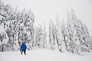 Snowshoers hike past evergreen trees covered in hoar frost and heavy snow on Sourdough Ridge, North Cascades National Park, Washington.