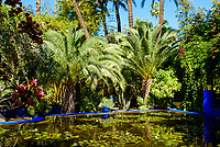 MARRAKESH, MOROCCO - CIRCA APRIL 2018: Pond and palm trees at the Jardin Majorelle in Marrakech