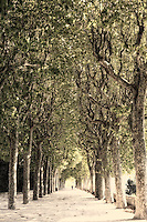 Mondego Green Park is another green spot of the city of Coimbra, Portugal. A beautiful place by the Mondego river, where you can take a walk, ride your bike, have a meal or simply enjoy the sun.