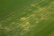 Nederland, Noord-Holland, Schermer, 28-04-2010; Polder De Schermer weiland met gele paardenbloemen..The Schermer polder,  meadow with yellow dandelions..luchtfoto (toeslag), aerial photo (additional fee required).foto/photo Siebe Swart