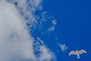 June 3, 2015 - Hastings, England, UK - A seagull flying along the sea coast of Southeast England. (Credit Image: © Vedat Xhymshiti/ZUMA Wire)