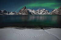 Northern lights shine in sky over Olstind mountain peak, Moskenesøy, Lofoten Islands, Norway