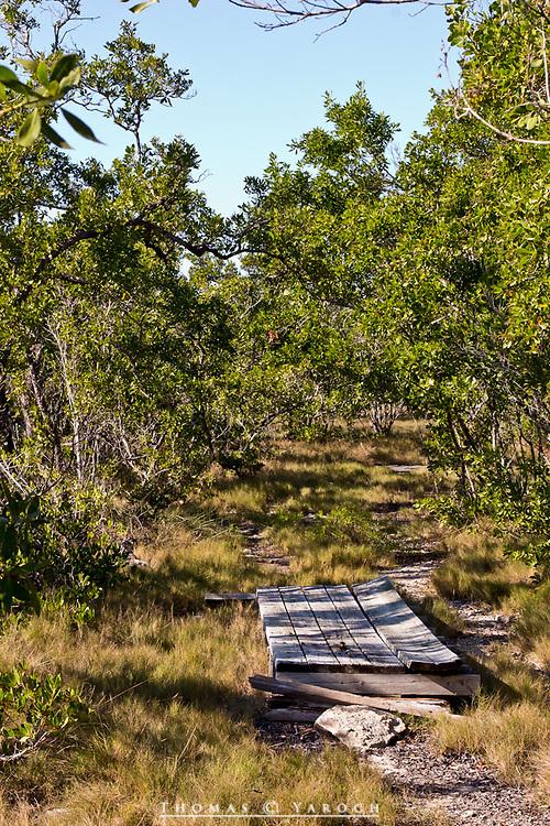 No Name Key; Key Deer; Florida Keys; Big Pine Key