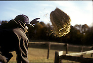 A worker tosses a bail of hay in a field at a horse farm.