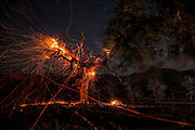 HEALDSBURG, CA - OCTOBER 29: A tree off Highway 128 burns during a red flag wind event, east of Healdsburg, California on October 29, 2019. (Photo by Philip Pacheco/AFP)