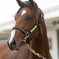 Canadian-Bred Select Yearling Sale 2013 - Gallery 01