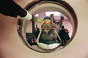 CT Scan of a horse's head at a California Veterinary teaching hospital. Veterinarian School, University of California, Davis. MODEL RELEASED.
